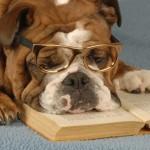 24 σκύλοι που κατηγορήθηκαν για ζημιές που δεν έκαναν…