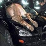 Αυτοκίνητο τράκαρε με άλογο