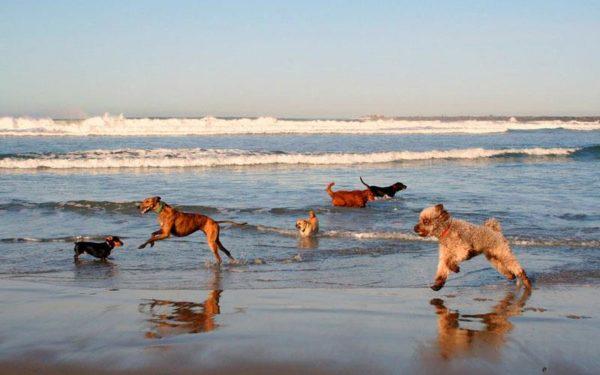 Μια παραλία αποκλειστικά για… σκύλους