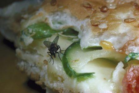 Τι μπορεί να συμβεί στο φαγητό σας εάν ακουμπήσει μία μύγα πάνω;