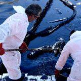 Οικολογική «βόμβα»: Στην Πειραϊκή η πετρελαιοκηλίδα – «Μαύρες» οι ακτές της Σαλαμίνας