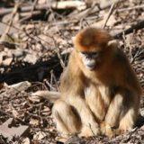 Μαϊμούδες απανθρακώθηκαν σε πάρκο στην Αγγλία