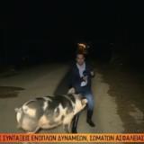 Viral παγκοσμίως το βίντεο με το ρεπόρτερ του Παπαδάκη που τον κυνηγούσε το γουρούνι