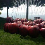 Στον κόσμο του μήλου η εκπομπή «Άγροweek»