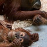 Φαναράκια έβαλαν φωτιά σε ζωολογικό κήπο - Κάηκαν 30 ζώα