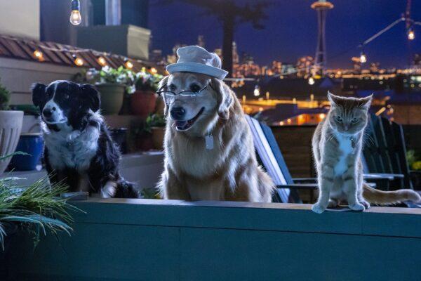 Σαν τον Σκύλο με τη Γάτα 3 στους κινηματογράφους