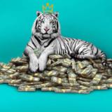 The White Tiger: Το επόμενο μεγάλο hit του Netflix