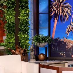 Η αποτυχημένη φάρσα της Heidi Klum στην Ellen DeGeneres