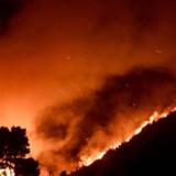 Φωτιά στα Βίλια: Καταγγελία για εμπρησμό