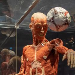 Body Worlds: Η πιο σπουδαία, διεθνών προδιαγραφών έκθεση στο Κέντρο Πολιτισμού «Ελληνικός Κόσμος»