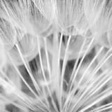 White: Θεματική έκθεση φωτογραφίας στην Blank Wall Gallery